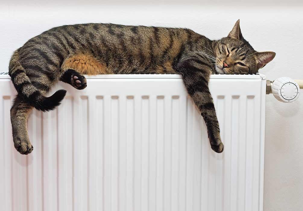 Bild på katt som sover på ett element
